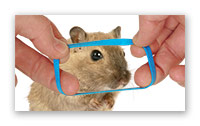 Приручение мышки